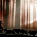 mujeres que danzan con lobos